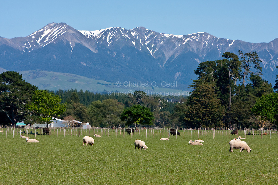 Farmland and Ruahine Mountains south of Napier, from Highway 2, north island, New Zealand.