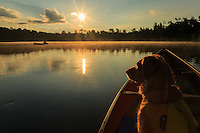 """""""Canoe Country Golden Radiance""""<br /> Daybreak in the wilderness inspires gratitude and an eagerness to begin another day of paddling. Amidst the serenity, the birds awaken in cheerful song, the loon calls echo across the waters, and the lakes beckon our canoes to another day of adventures."""