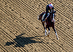 May 15, 2019 : War of Will exercises as horses prepare for Preakness Week at Pimlico Race Course in Baltimore, Maryland. Scott Serio/Eclipse Sportswire/CSM