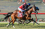 DEL MAR, CA  SEPTEMBER 6:  The start of the Del Mar Juvenile Turf on September 6, 2021 at Del Mar Thoroughbred Club in Del Mar, CA. (Photo by Casey Phillips/Eclipse Sportswire/CSM)
