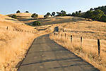 Country road and barb wire fences through the golden hills dotted with oak trees on a summer morning, Amador County, Calif.
