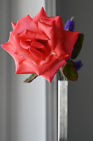 Gardening-Close up of pink rose- minimalism Floral arrangement