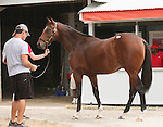 11 September 2010.  Hip #206  Tiznow - Taittinger Rose colt, consigned by Eaton Sales.