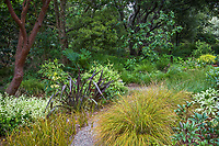 Xeriscape drought tolerant, partial shade California meadow garden with mixed foliage, colors, and textures, David Fross