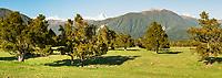 Farmland in Fox Glacier, Westland Tai Poutini National Park, UNESCO World Heritage Area, West Coast, South Westland, New Zealand, NZ