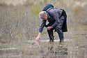 Volunteer surveying for tadpoles and spawn of the Natterjack Toad (Epidalea calamita) in pond in a dune slack, Ainsdale Nature Reserve, Merseyside, UK. May. Photographer: Alex Hyde