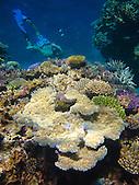 Plongeur à la découverte des récifs calédoniens, Pléiades du Sud, Ouvéa