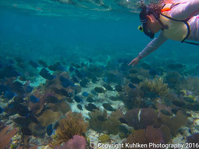 swimming in a school of blue tangs, Key Largo, FL 2016