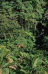 Case perdue dans la jungle Ile de la Dominique.