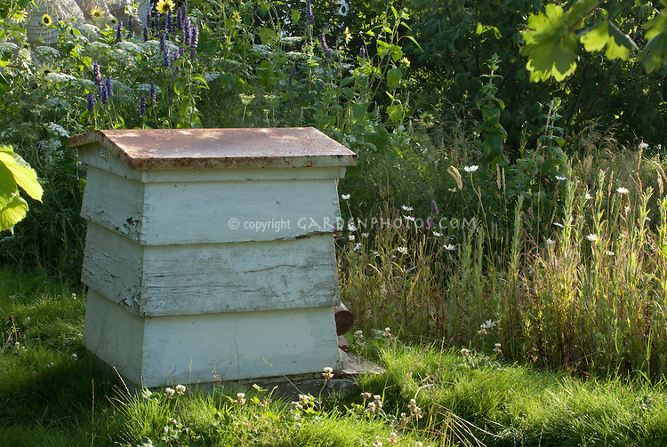 Beehive in the garden with flowers and clover for making honey, Warre beehive type