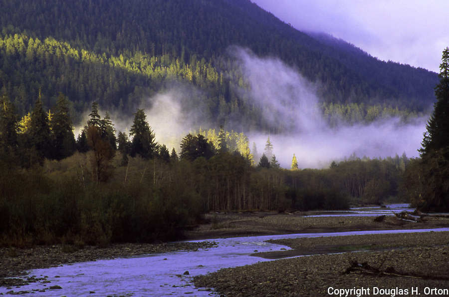 The south fork of the Quinault River drops out of Olympic National Park wilderness into Lake Quinault on the Olympic Penninsual, WA Olympic Peninsula