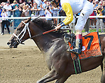 Unbridled Forever (no. 7), ridden by John Velazquez and trained by Dallas Stewart, wins the 37th running of the grade 1 Ballerina Stakes for fillies and mares three years old and upward on August 29, 2015 at Saratoga Race Course in Saratoga Springs, New York. (Bob Mayberger/Eclipse Sportswire)
