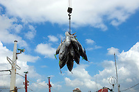 Bali Harbor Tuna unloading