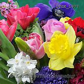 Gisela, FLOWERS, BLUMEN, FLORES, photos+++++,DTGK1977,#f#
