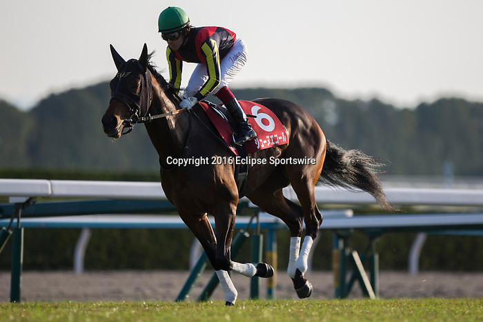 KYOTO,JAPAN-NOVEMBER 12: Jeune Ecole,ridden by Yuichi Fukunaga,prepares for the Daily Hai Nisai Stakes at Kyoto Racecourse on November 12,2016 in Kyoto,Kyoto,Japan (Photo by Kaz Ishida/Eclipse Sportswire/Getty Images)