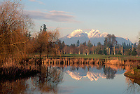 """Belmont Golf Course in Langley, and """"Golden Ears"""" Mountains (Coast Mountains) in Golden Ears Provincial Park, Southwestern BC, British Columbia, Canada - Fraser Valley in Spring"""