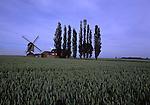 DEU, Deutschland, Nordrhein Westfalen, Niederrhein, Titz, Kastenbockwindmuehle, Dueppelsmuehle, Die Dueppelsmuehle, zusammen mit den in Toenisberg und Duelken, als eine der letzten drei Bockwindmuehlen am Niederrhein. 1708 wurde sie errichtet. 1828 kaufte sie der Mueller Treibels aus Spiel und setzte sie auf den Dueppel. Dort war sie bis etwa 1950 in Betrieb...[Fuer die Nutzung gelten die jeweils gueltigen Allgemeinen Liefer-und Geschaeftsbedingungen. Nutzung nur gegen Verwendungsmeldung und Nachweis. Download der AGB unter http://www.image-box.com oder werden auf Anfrage zugesendet. Freigabe ist vorher erforderlich. Jede Nutzung des Fotos ist honorarpflichtig gemaess derzeit gueltiger MFM Liste - Kontakt, Uwe Schmid-Fotografie, Duisburg, Tel. (+49).2065.677997, fotofinder@image-box.com, www.image-box.com]