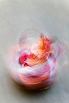 "Dancer performing in the Paro ""Tsechu"" or annual religious Bhutanese festival, Paro, Bhutan"
