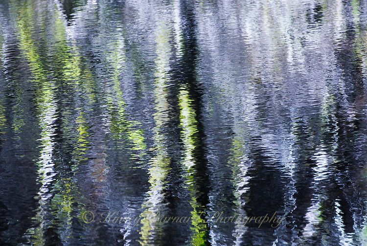 """""""IMPRESSIONIST MAGIC""""<br /> <br /> Early morning at Eel Lake, Oregon. Richly colored  reflections of birch trees upon the water give an eerie and impressionistic feeling to this photograph. This is a natural image. ORIGINAL 24 X 36 GALLERY WRAPPED CANVAS SIGNED BY THE ARTIST $2,500. CONTACT FOR AVAILABILITY."""