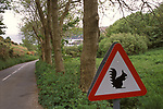 Beware of red squirrels on the road to Rosel Jersey the Channel Islands UK 2000s