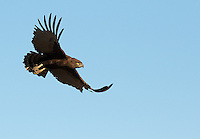South Africa is home to many different eagle species.