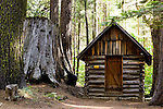 Nelder Grove, Sierra National Forest, Madera County, Oakhurst California, Photos by {The Studio} Yosemite and Joelle Leder Photography Studio ©, <br /> From Wikipedia - Nelder Grove is a sequoia grove located in the Sierra National Forest, Madera County, California. It is a 1540 acre (6.2 km²) tract containing over 100 mature Giant Sequoias. It also contains a number of sequoia stumps, left over from when the area was logged prior to its acquisition by the United States Forest Service in 1928. A National Forest campground is also present.