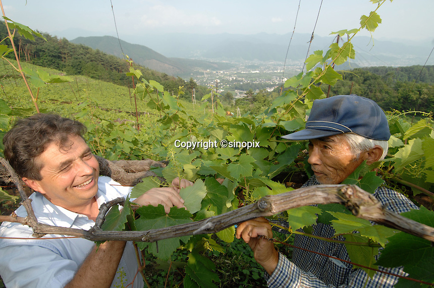 Denis Dubourdieu in the Makioka Vineyard Yamanashi Prefecture, Japan. Dubourdieu is helping to develop a Japanese white wine that will be eaten primarily with Japanese cuisine.