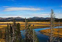 The Yellowstone River wends its way through golden meadows.