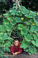 HS69-003z  Boy in teepee garden trellis with runner beans (Fortex) and Baby Bear pumpkins