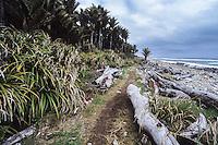Coastal section of Heaphy Track along Nikau Palm grove, Kahurangi National Park, West Coast, New Zealand