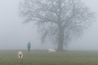 2016 12 30 Foggy weather in Redbourn, England, UK