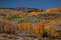 Fall colors have arrived at Dixie National Forest, Utah