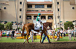 DEL MAR CA - JULY 30: Stellar Wind #2 with Victor Espinoza aboard walks in the paddock before the Clement L Hirsch Stakes at Del Mar on July 30, 2016 in Del Mar, California. (Photo by Alex Evers/Eclipse Sportswire/Getty Images)