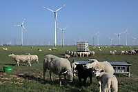 Germany, Green Hydrogen Project Westküste100, consortium plans green hydrogen generation with power from wind turbines / DEUTSCHLAND, Schleswig-Holstein, Wasserstoff-Projekt Westküste 100, Konsortium plant Erzeugung von grünem Wasserstoff mit Windstrom, Enercon Windturbinen