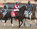 Valid post parade_ Revolutionary (#2) with Javier Castellano splits horses to win the 133rd running of the Grade 3  Withers Stakes for 3-year olds, going 1 1/16 on the inner dirt, at Aqueduct Racetrack.  Trainer Todd Pletcher.  Owner Winstar Farms