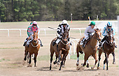 Turning for home at Springdale Race Course.
