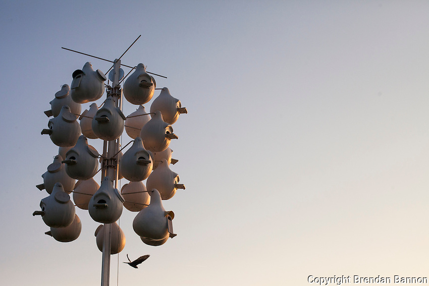 Bird houses on the shore of Lake Chautauqua. Chautauqua, NY. June 27, 2014. Photo by Brendan Bannon