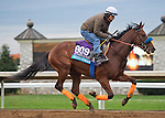 October 26, 2015 :  Dressed in Hermes, trained by Janet Armstrong and owned by Budget Stables, Inc., exercises in preparation for the Breeders' Cup Juvenile Turf at Keeneland Race Track in Lexington, Kentucky on October 26, 2015. Scott Serio/ESW/CSM