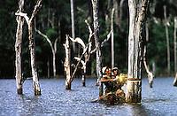 """DescriÁ""""o<br /> Mateiros de canoa escolhem e serram as copas das ·rvores que devem ser cortadas do lago para vender a madeira, desmatamento.<br /> Par· - Brasil<br /> 27/04/2000. <br /> ©FOTO: PAULO SANTOS/INTERFOTO"""