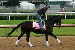 April 26, 2015 Kentucky Derby and Oaks workouts, Churchill Downs. Sarah Sis, owner Joe Ragsdale, trainer Ingrid Mason.  By Sharp Humor x Emerald Gal (Gilded Time)  ©Mary M. Meek/ESW/CSM