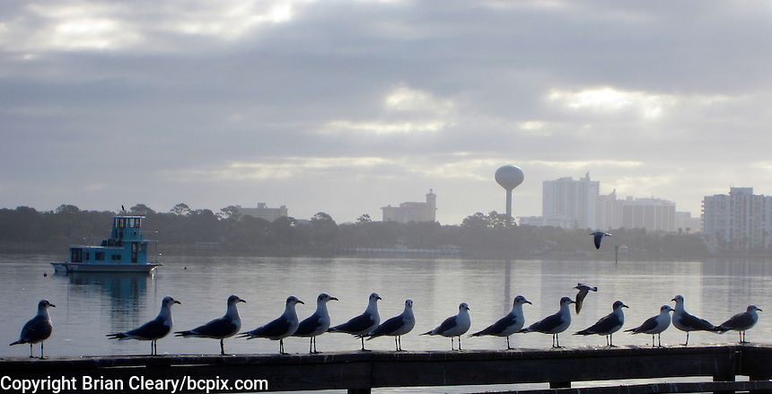 Seagulls line a dock railing on the Halifax River, Holly Hill, Florida.  (Photo by Brian Cleary/www.bcpix.com)