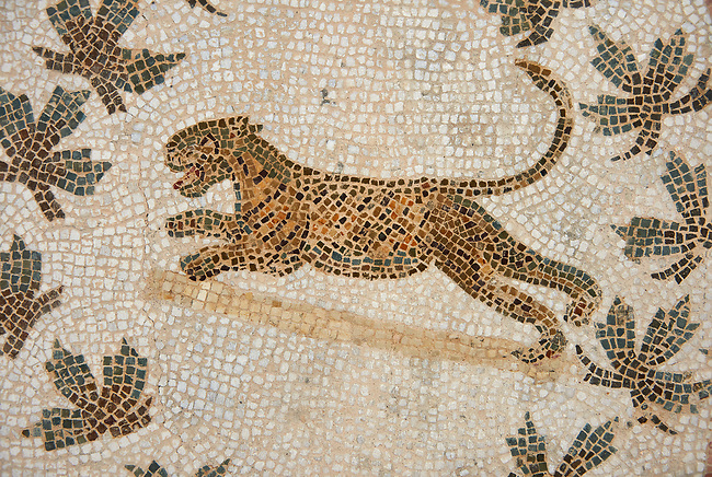 Picture of a Roman mosaics design depicting  panthers, from the ancient Roman city of Thysdrus. 3rd century AD, House of Dolphins. El Djem Archaeological Museum, El Djem, Tunisia.