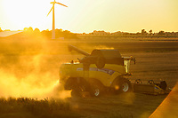 Germany, Schleswig Holstein, grain harvest with new Holland combine harvester durimg sunset