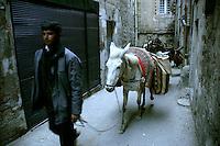 Donkey carrying firewood in Mardin, southeastern Turkey