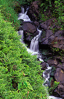 Beautiful cascading waterfalls over rocks surrounded with lush green ferns on the Hamakua coast on the Big Island of Hawaii.