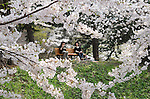 """A couple of women doing hanami in the park, having lunch under a tree. The """"Hirosaki Sakura-Matsuri"""" cherry blossom festival is held at Hirosaki Park from late April to early May every year when the cherry blossoms are in full bloom. The park bustles with people enjoying rental boats, stalls and the illumination of cherry blossoms at night."""