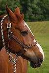 HORSE AT SPRINGDALE FARMS IN PENNSYLVANIA