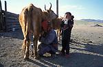 A Tsataan woman and her child milk their cows on Tsataan Uul lake,   Outer Mongolia.