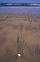 New Zealand,  December 1994  ..New Zealand Ninety Mile Beach..Photo Kees Metselaar