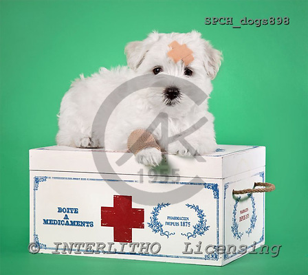 Xavier, ANIMALS, dogs, photos+++++,SPCHDOGS898,#a# Hunde, perros